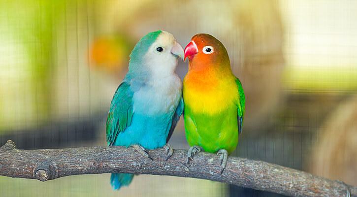 Avian Care