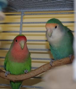 Avian & Exotic Pet Lodging